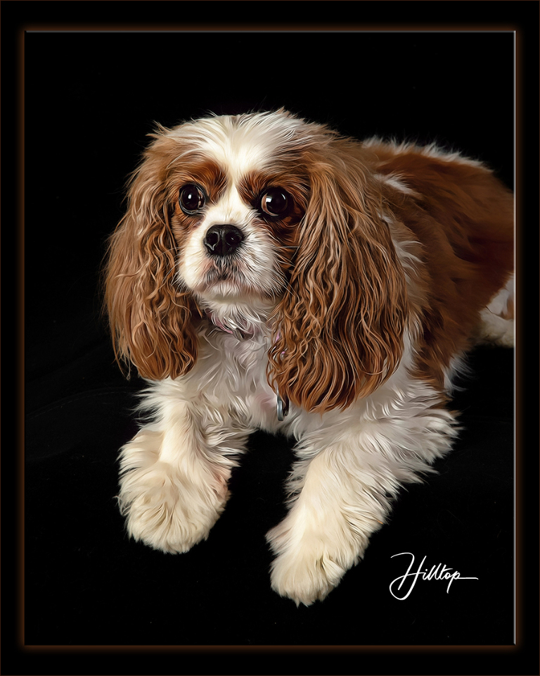Pet-Photography_Pippa