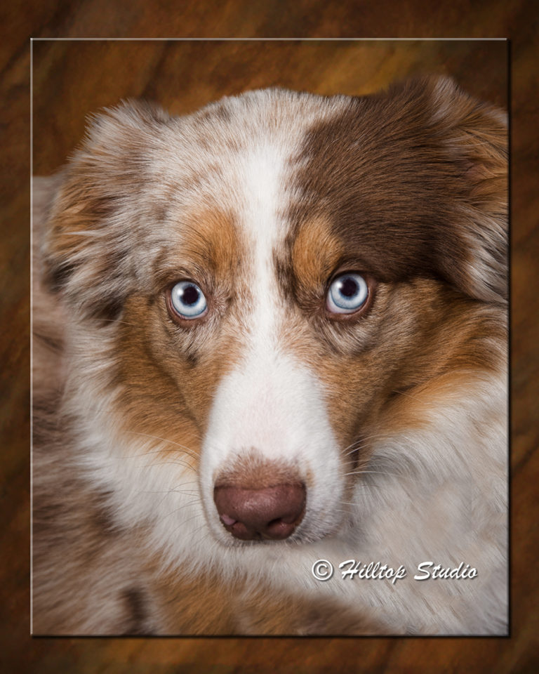 Pet-Photography_Willow